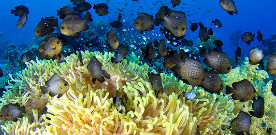 El 64% de los océanos, dentro de un párrafo